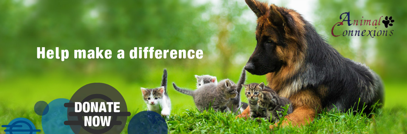 Donate to Animal Connexions